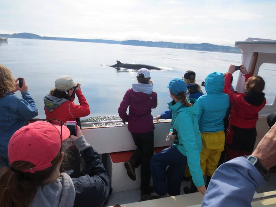 Marine Mammal Summer Camp campers and whale